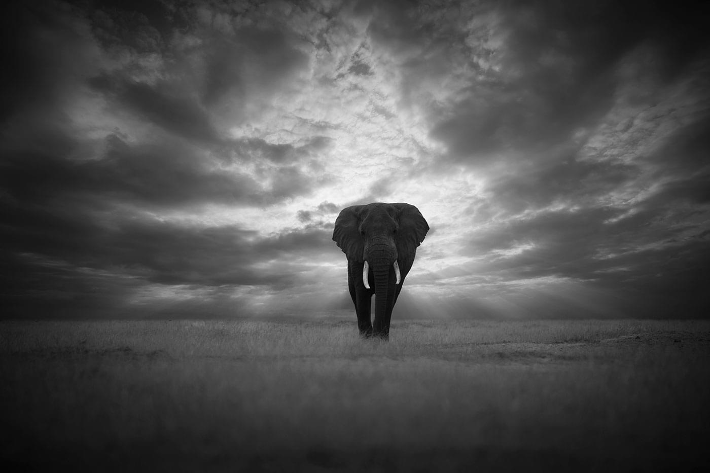 björn persson fotograf